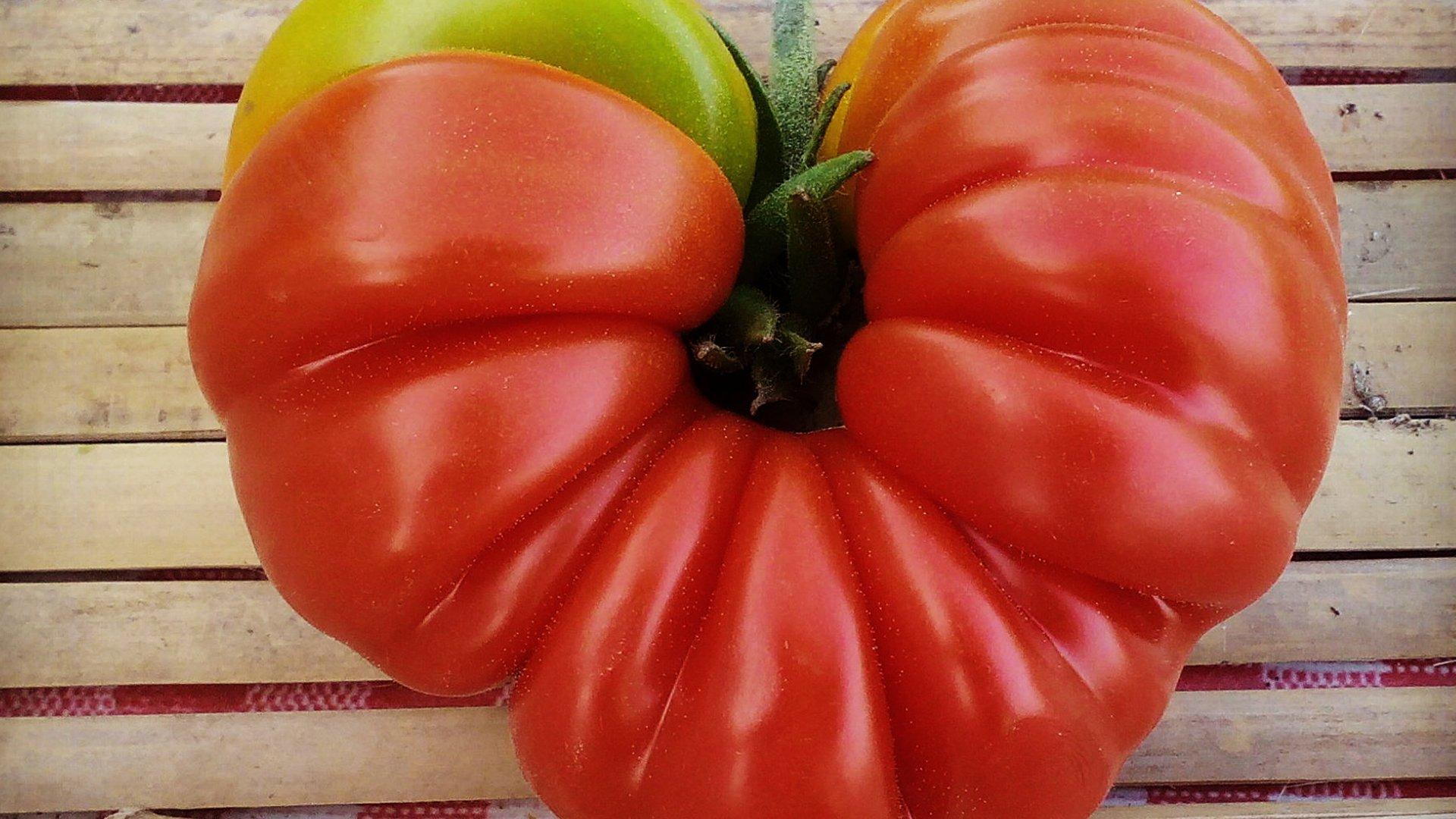 Tomato - L'imaGiraphe on Flickr (Creative Commons - AT-SA)